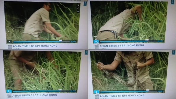 Goatee Toni catches wild snakes for UK TV channel